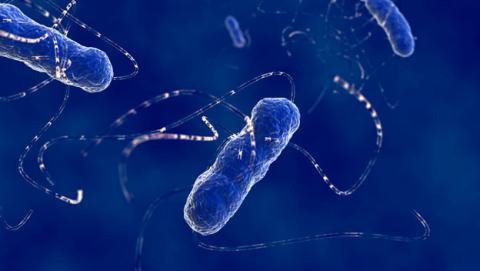 bacteria resistente antibioticos