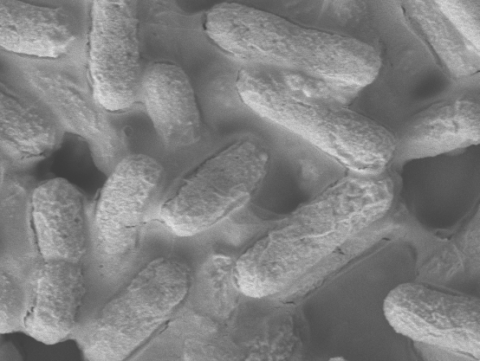 Material antibacteriano