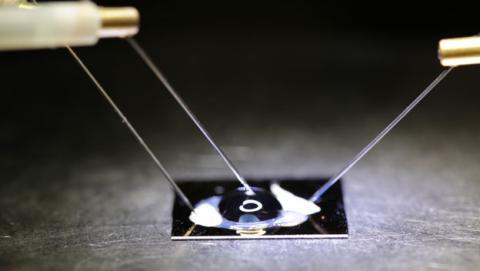chip grafeno detecta enfermedades