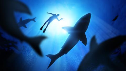 Los humanos son una amenaza para los tiburones, no al revés