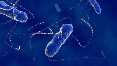 bacteria destruye cancer