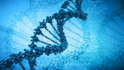 China modificará el ADN de humanos adultos por primera vez