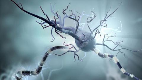 IBM crea las primeras neuronas artificiales del mundo