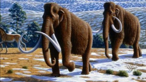 Los mamuts podrían ser declarados especie protegida
