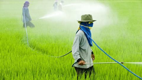 Pesticidas que se adhieren mejor, menos contaminación