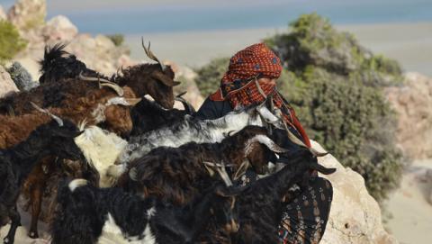 Socotra, el documental de Jordi Esteva sobre esta isla remota en el Índico