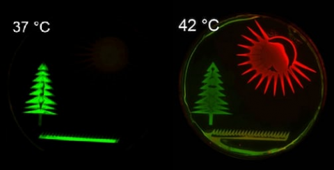Bacterias responden a cambios de temperatura