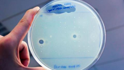 nuevos antibioticos