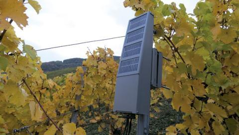 Cultivo de vino con Internet de las Cosas