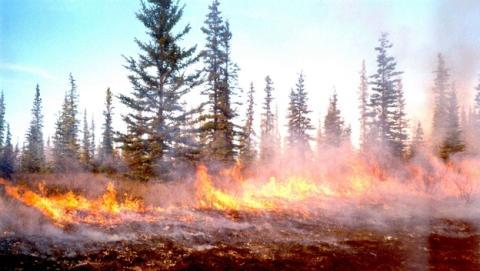 Incendia un bosque para hacerse un selfie y subirlo a Facebook