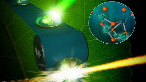 Rayos X permite ver fotosíntesis en condiciones normales