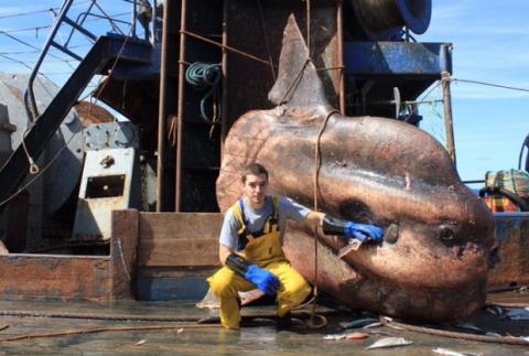 Un pescador muestra en Twitter los peces más terroríficos