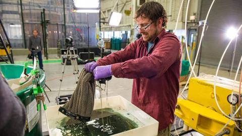 esponja absorbe petróleo