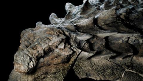 Hallan dinosaurio momificado que parece un dragón de Juego de Tronos