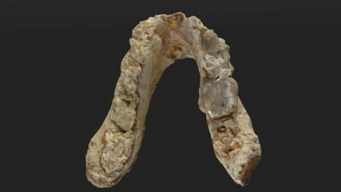 Restos arqueológicos modifican el lugar de origen del hombre.