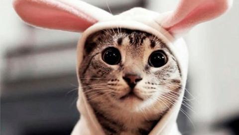 Te están dando gato por liebre con tus entradas