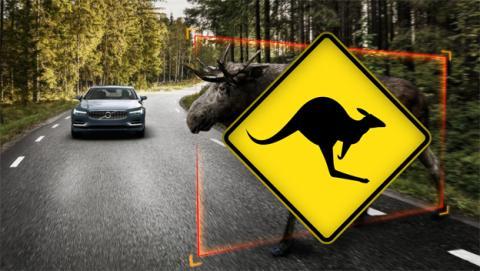 La conducción autónoma de Volvo no reconoce a los canguros