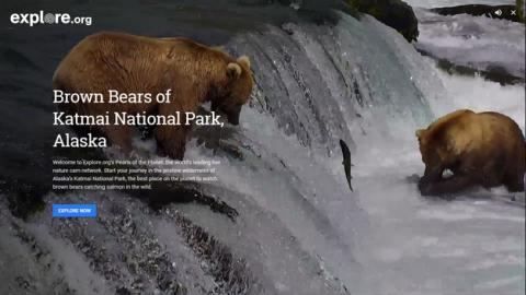 Explore.org, Google te muestra animales salvajes en directo
