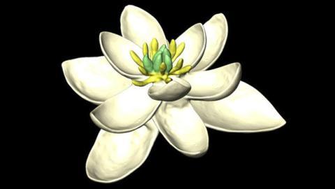 Primera flor documentada por la ciencia.