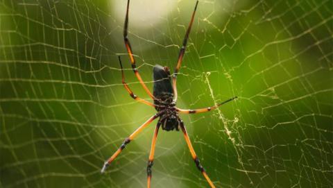 tela araña grafeno