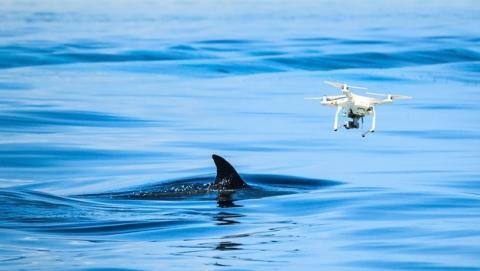 Drones para vigilar a los tiburones en las playas australianas
