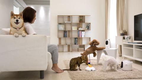 Pawbo presenta un collar GPS para perrros y gatos y un dispositivo monitorizador.