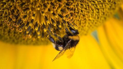 abeja antibiotico