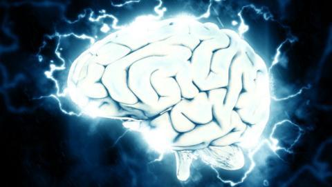Un cerebro conectado a Internet gracias a este increíble experimento científico.