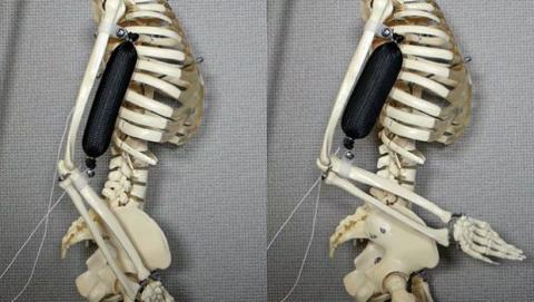 Músculo robot
