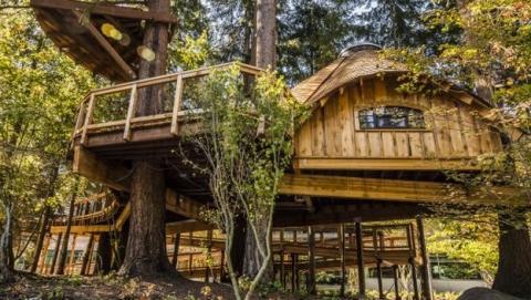 Microsoft Construye Casas En Los Arboles Para Sus Empleados Life - Casas-en-los-arboles