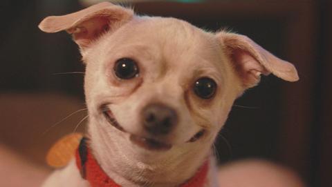 perro risa