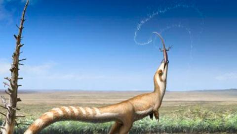 sinosauropteryx primer dinosaurio descubierto con antifaz