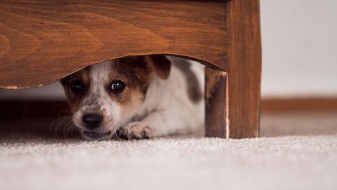 perro miedo petardos