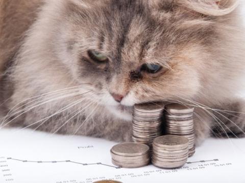Gato monedas