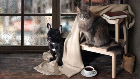 gato perro casa peligro