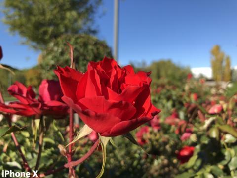 Fotografía tomada con la cámara del iPhone X (2)