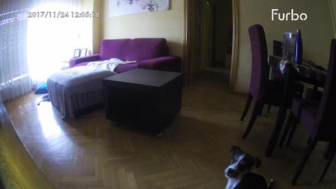 furbo cámara perros