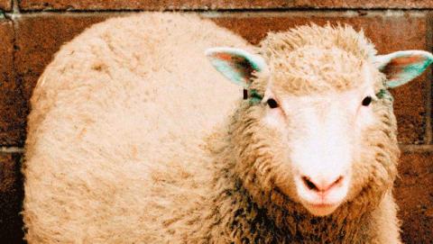 Causa muerte fallecimiento oveja Dolly, primer animal clonado