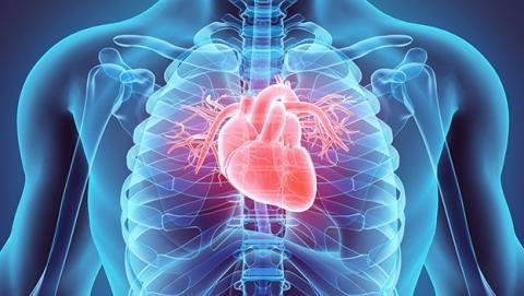 musculo artificial corazón