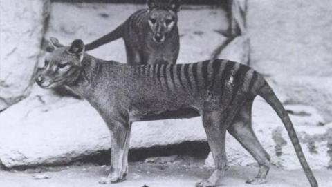 La ciencia podría revivir animales que ya han desaparecido.