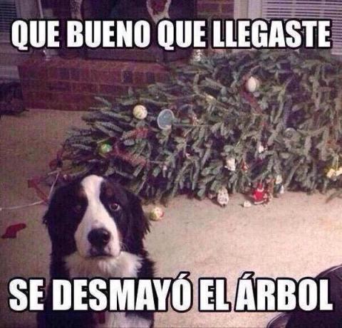 felicitación navideña de perros para whatsapp