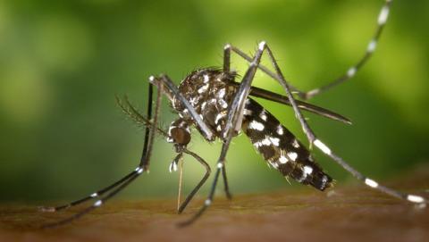 Descubren cómo evitar que te piquen los mosquitos, aunque aún falta para el repelente definitivo.