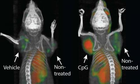 Tumor ratón