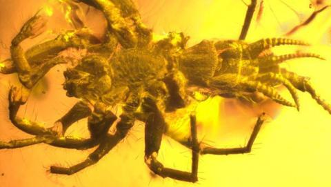 Araña prehistórica con colmillos y cola.