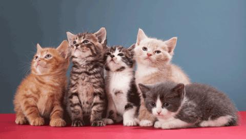 Cuándo es y por qué se celebra el Día Internacional del Gato