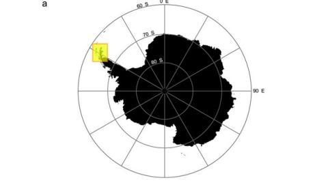 Descubren una supercolonia de 1.5 millones de pingüinos oculta en la Antártida