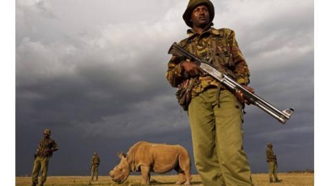 El último rinoceronte blanco del Norte macho, gravemente enfermo. Foto: CNN