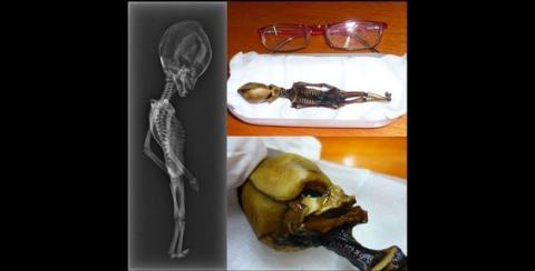Descubren quién es el alien de Atacama, gracias al ADN