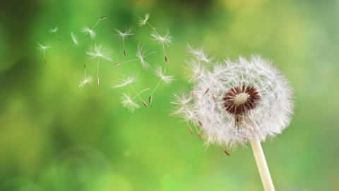 Cómo combatir la alegria primaveral
