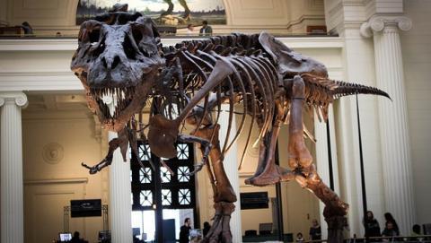 Qué mato en realidad a los dinosaurios.